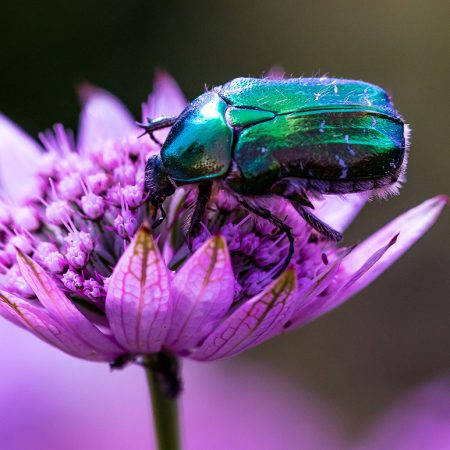 Bug_2
