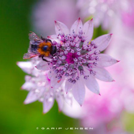 beautyful-living-of-a-bug