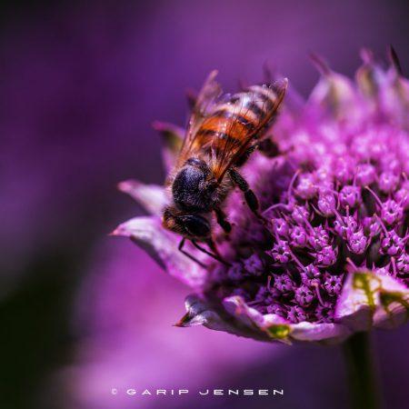 bee-bathing-in-color