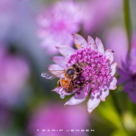 bee-from-above-in-flower