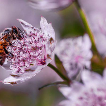 bee-side