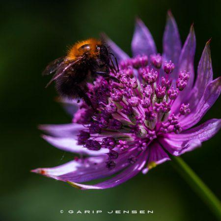 bumblebee-kind-of