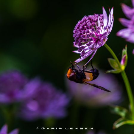 colorful-life-of-a-bug