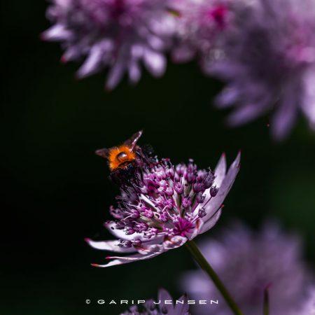 enjoying-life-in-a-flower