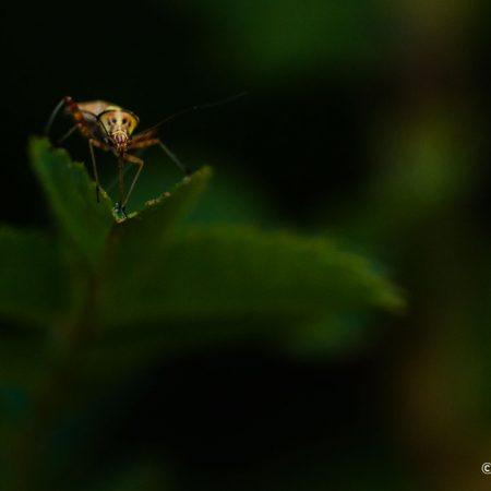 tounge-like-a-leg-bug