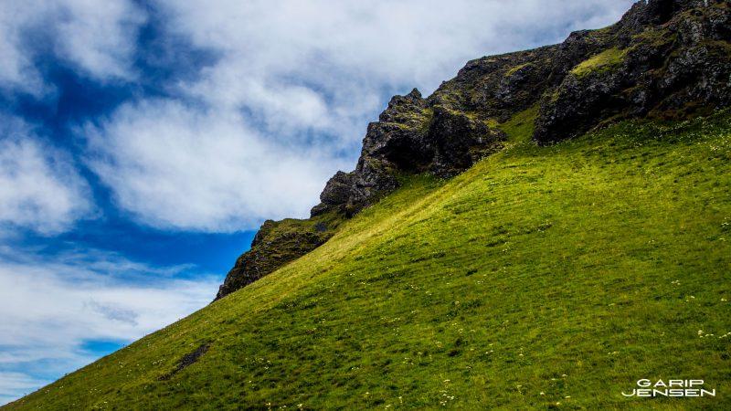 Iceland-skogar-hill