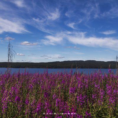 near-geddegedde-up-north-Sweden