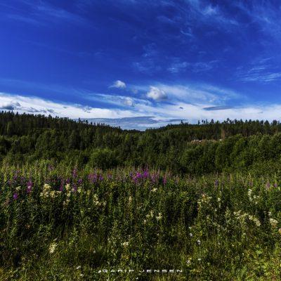 summer-up-north-Sweden