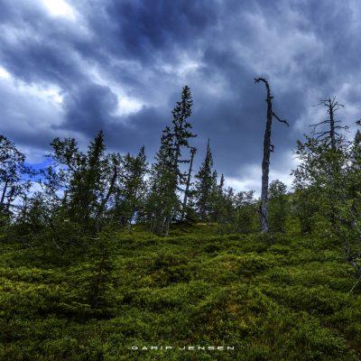 walk-from-njupeskär-Sweden