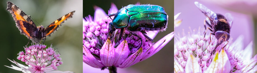 """Links to """"Photographing insects"""" by Garip Jensen. Butterflies, bugs and bees - my backyard photo adventure."""
